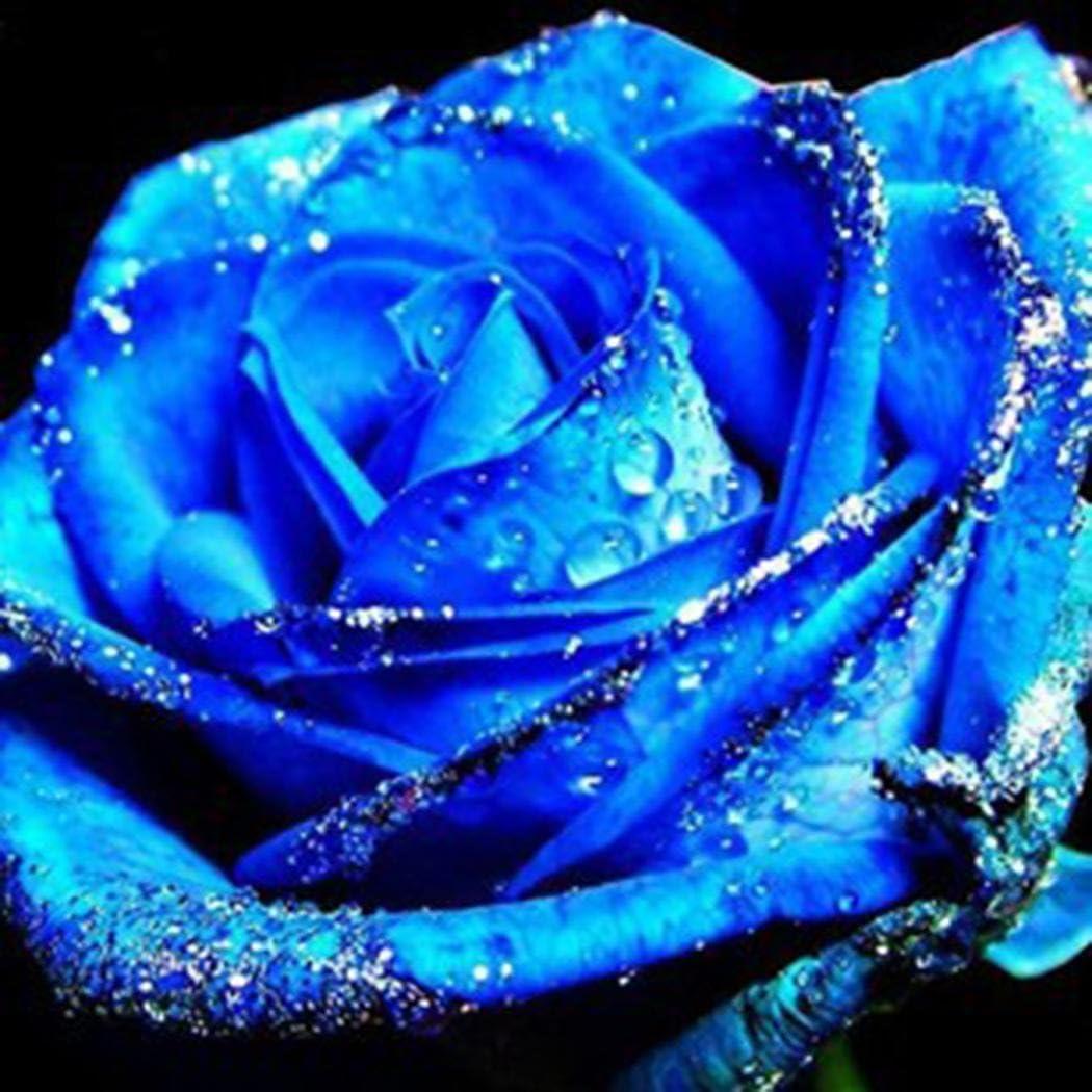 winterharte Blumensamen mehrj/ährig 100Samen Cioler Rosensamen Edelrose Blumensamen Regenbogen Rose Bunte Blumen Samen f/ür Garten,Lange Bl/ütezeit