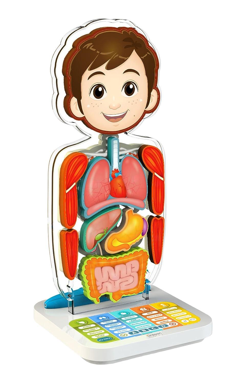 Oregon Scientific SA218 Cuerpo humano interactivo - Smart Anatomy ...