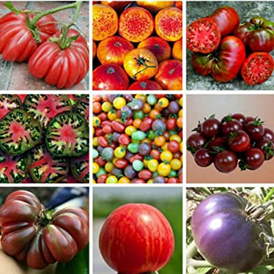 Gilroy Seeds, 100Pcs Mixed Tomato Seeds Vegetable Fruit Plant for Indoor Outdoor Home Balcony Garden Yard Farm Planting : Garden & Outdoor