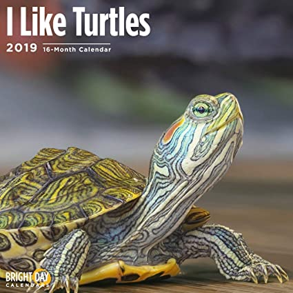 Hawaii Public School Calendar 2019-16 Amazon.: Turtles 2019 16 Month Wall Calendar 12 x 12 Inches