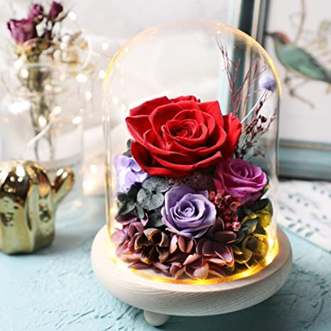 Amazon.com: XJ&DD Romántico Rosa Regalo, Nunca Enamorado ...