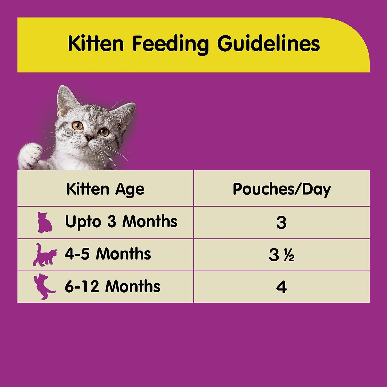 Buy Whiskas Wet Meal Kitten Cat Food Chicken in Gravy 85 g