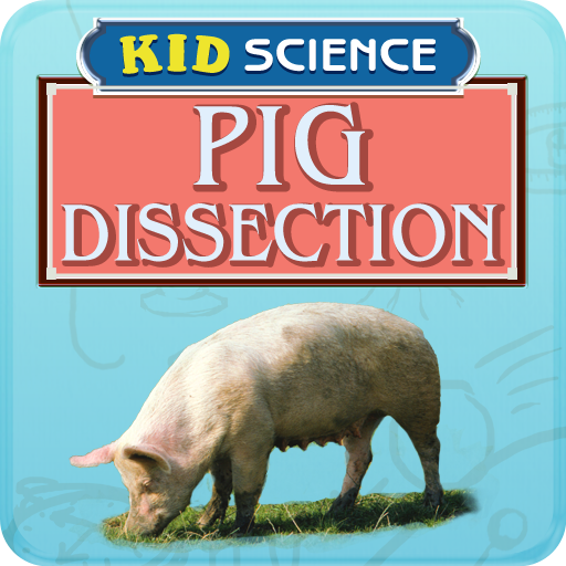 Pig Dissection - Dissection Lab