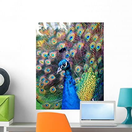 cca74782444 Image Unavailable. Image not available for. Color  Wallmonkeys Beautiful  Colourful Preening Peacock Wall Mural ...