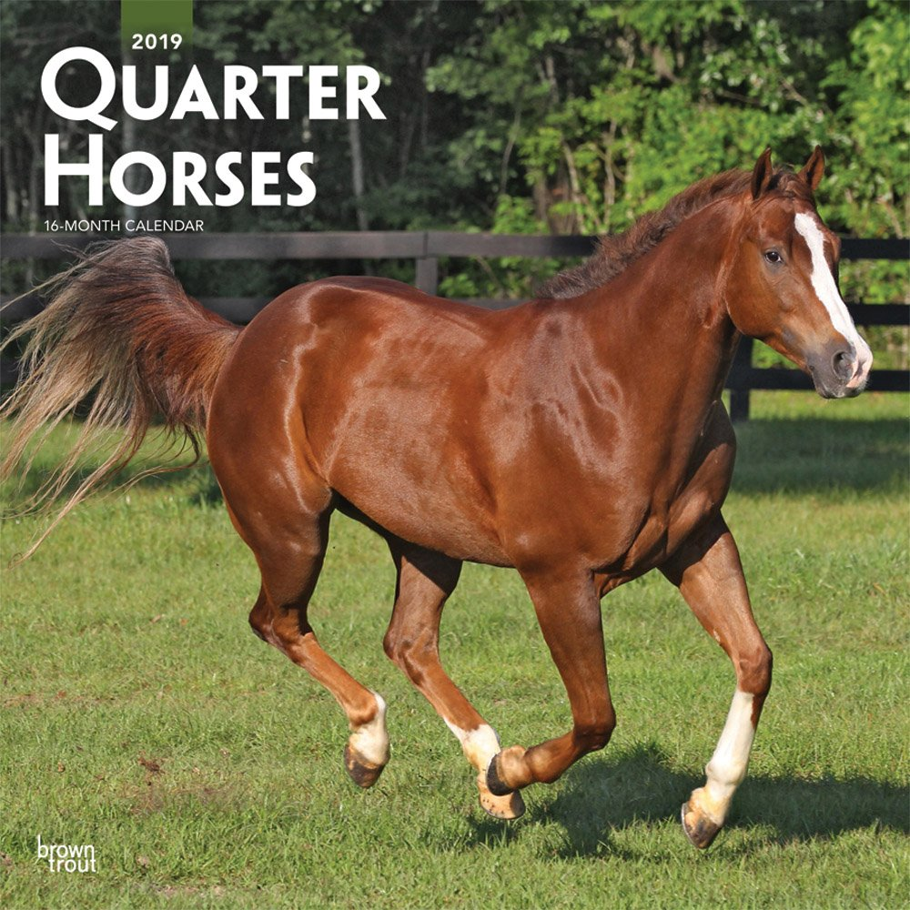 Quarter Horses 2019 12 x 12 Inch Monthly Square Wall