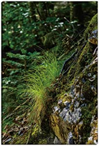 Hitecera Fresh Grass tuft on a Rock Gifts for Couples,150641 Wall Art Decor Canvas,12 x18in