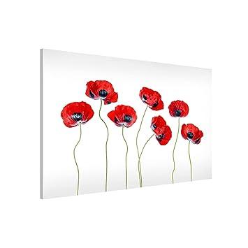 Bilderwelten Pizarra magnética - Ladybug Poppies - Formato ...