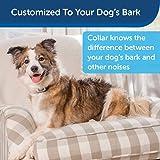 PetSafe Spray Bark Dog Collar - Anti-Bark Device