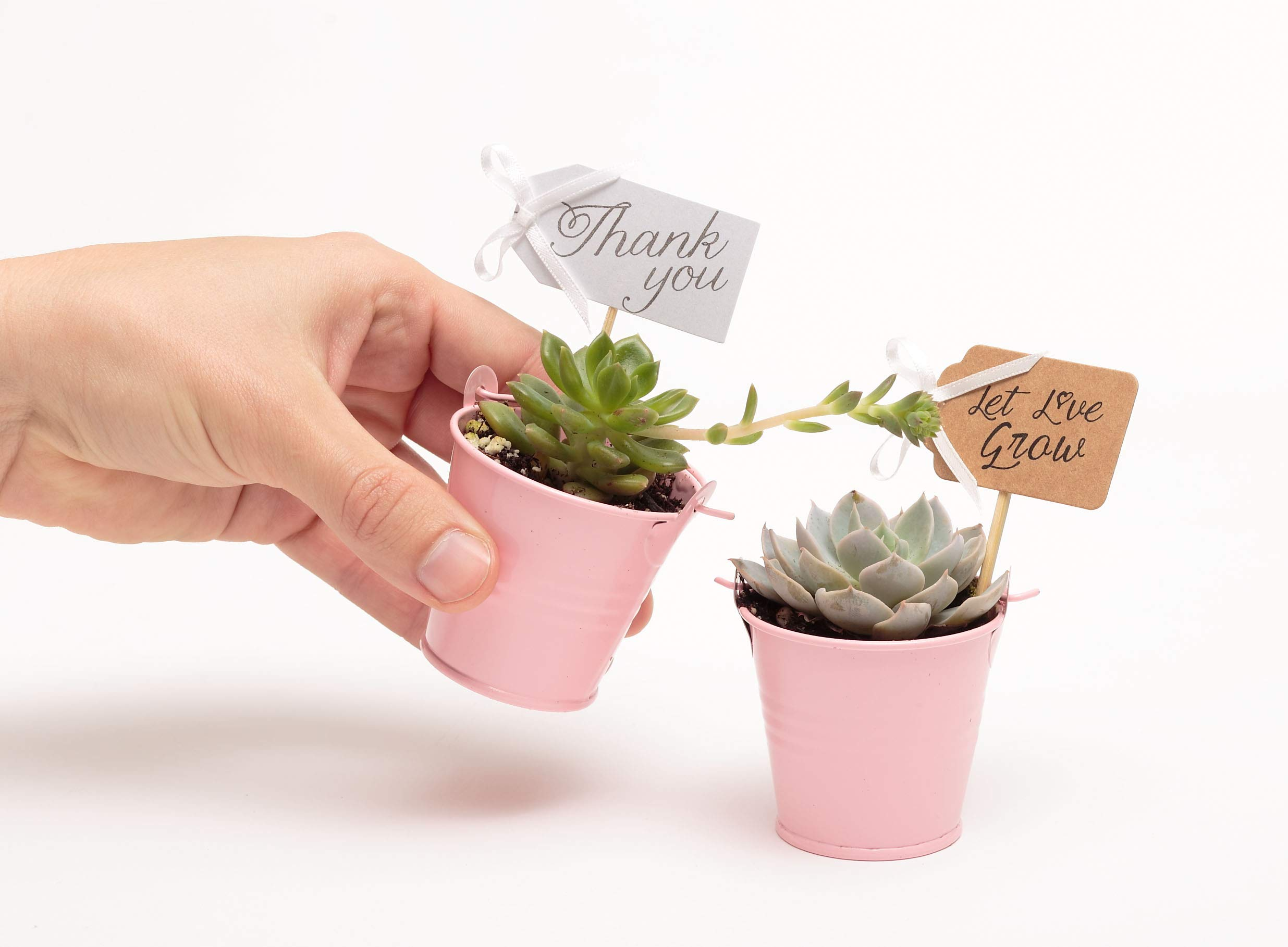 2 in. Wedding Event Rosette Succulents with Pink Metal Pails and Thank You Tags (30) by Succulent Source (Image #4)