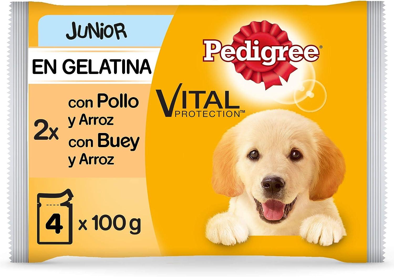 Pedigree Multipack de Comida húmeda para Perros Junior en Gelatina, Sabor Pollo Buey y Arroz (13 Packs x 4 bolsitas x 100g)