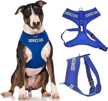 Arnés para perro, impermeable y acolchado, de color azul, con ...