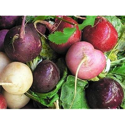 75+ Radish Easter Egg Mix Seeds Root Vegetable Tasty Salad : Garden & Outdoor