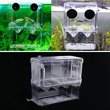 Daxibb Dabixx Separative Box Breeding Doble Breeder Insulation Acuario Incubadora Fish Tank: Amazon.es: Hogar