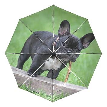 Ieararfre - Paraguas Triple Plegable para Bulldog Francés, Resistente al Viento, Mango ergonómico,