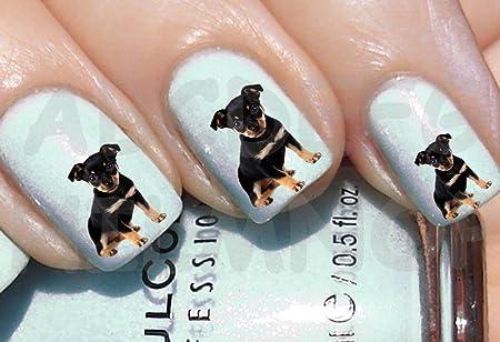 Aws Set Water Newsee Decals Dog Pincher Pinscher Puppy Nail Art