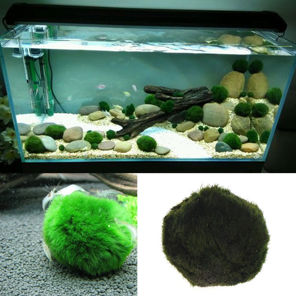 Kofun Artificial Musgo Ball Acuario Acuario Decor Ornament Naturales Plantas Diámetro: 2,5 cm DE 4,5 cm (0,98 en de 1,77 in): Amazon.es: Hogar