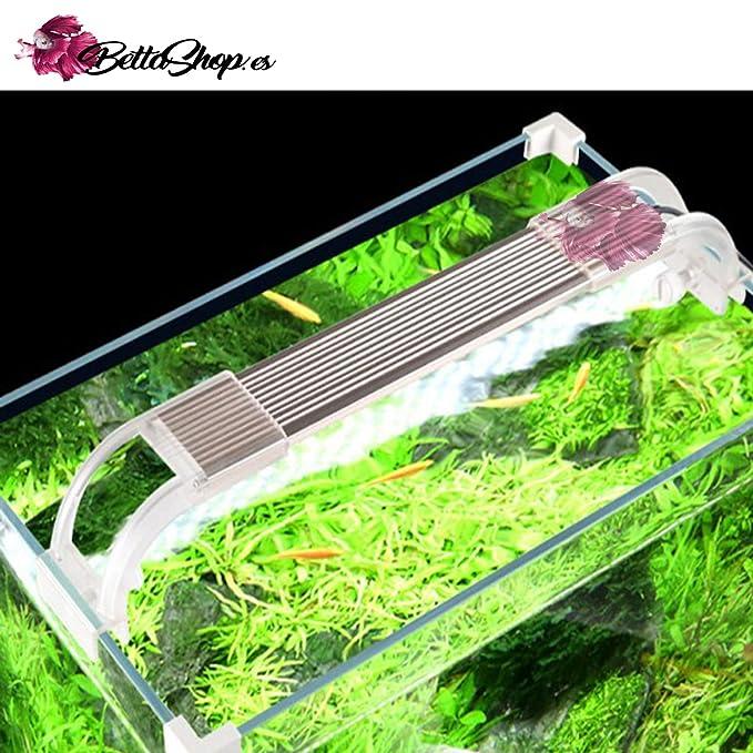 Acuarios Acuario 18,4 litros de Cristal Filtro y Luz LED: Amazon.es: Hogar