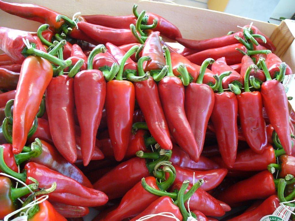 25 Organic Heirloom Piment d/'Espelette Pepper Seeds-M 107