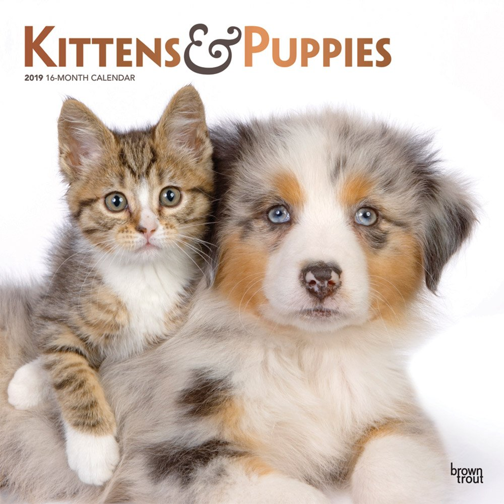 Kittens & Puppies 2019 12 x 12 Inch Monthly Square Wall Calendar with Foil Stamped Cover, Animals Cute Kittens