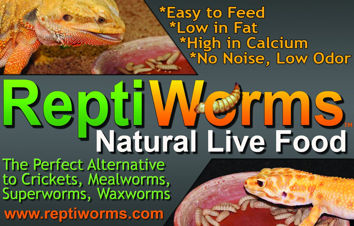 Animal Specialties BSF – Black Soldier Fly Larvae – Reptiworms Brand 100 Count – Large by Animal Specialties (Image #7)