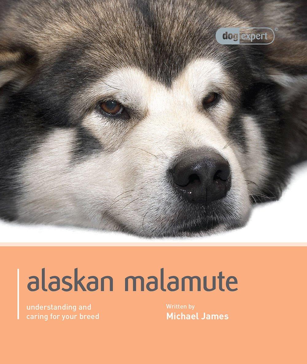 Alaskan-Malamute-Dog-Expert