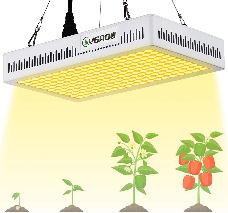 grow light succulents