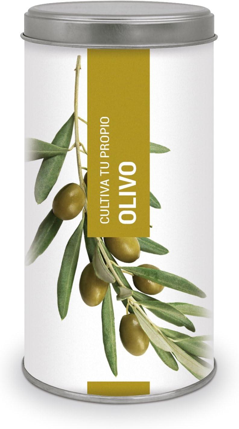 Garden Pocket - Kit de Cultivo Bonsái Olivo