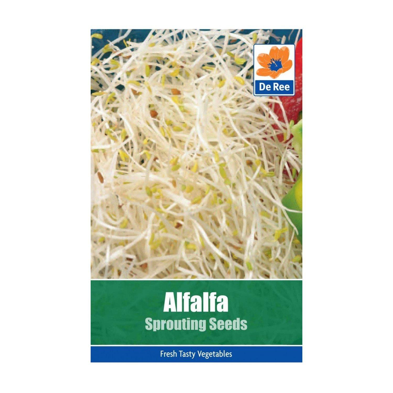 Alfalfa Seeds Bulbs and Seeds Direct
