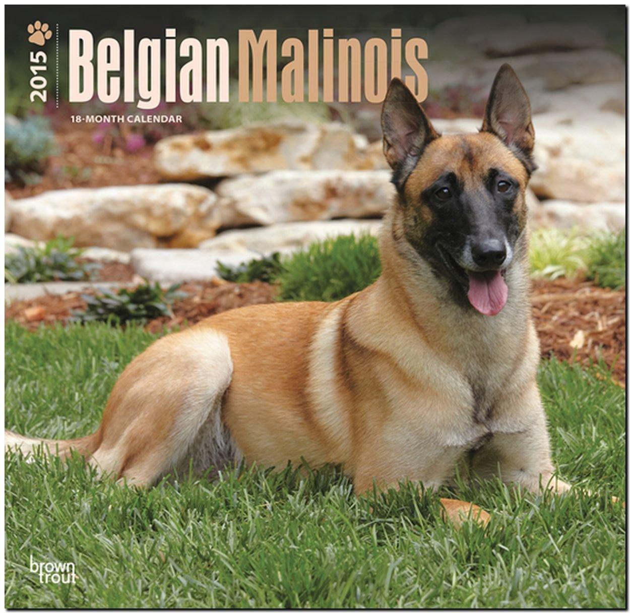 Belgian malinois 2015 square 12x12 browntrout 9781465033819 belgian malinois 2015 square 12x12 browntrout 9781465033819 amazon books nvjuhfo Gallery