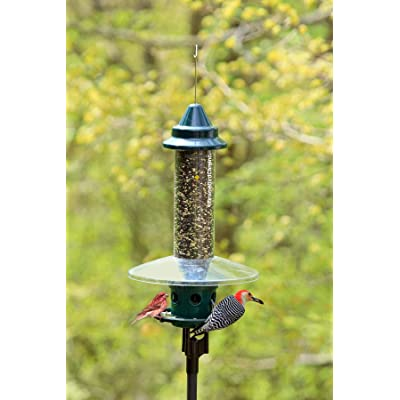 Squirrel Buster Plus Squirrel proof Bird Feeder Hanging Cardinal Ring Feeding