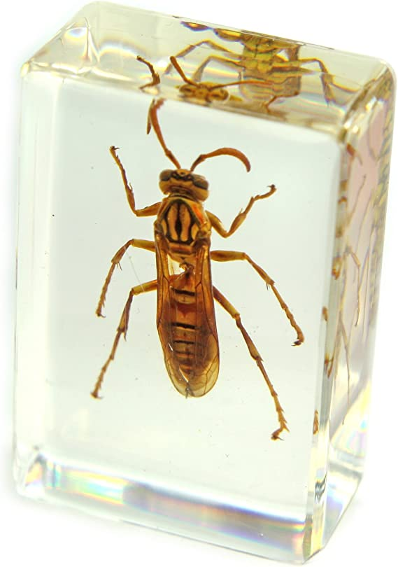 5 To Choose From Real Bug Small Paperweight