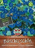SPERLI's Bienenfreund Büschelschön (Phacelie)