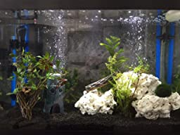 Caribsea eco complete 20 pound planted for Cloudy fish tank water in established tank