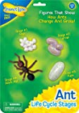 Ant Life Cycle Toy - 4 Piece Set Shows Life Cycle Of An Ant
