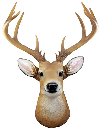 Amazon com: Ebros 12 Point Buck Trophy Taxidermy Wall Decor Deer