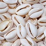 50Pcs Cauris Coquillage Bijoux (1.8-2.2 cm)