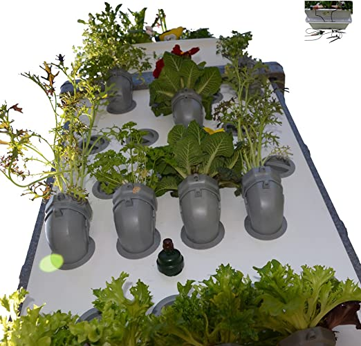i3-Benjamin Starter-Kit Incl. Auto irrigación jardín Vertical: Amazon.es: Jardín