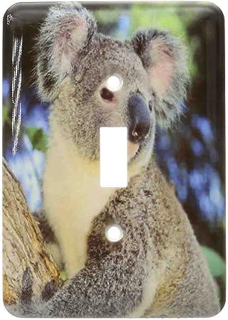 3drose Llc Lsp 85322 1 Koala Bear Australia Eucalyptus Tree Sa01 Ksc0000 Kevin Schafer Single Toggle Switch Switch Plates
