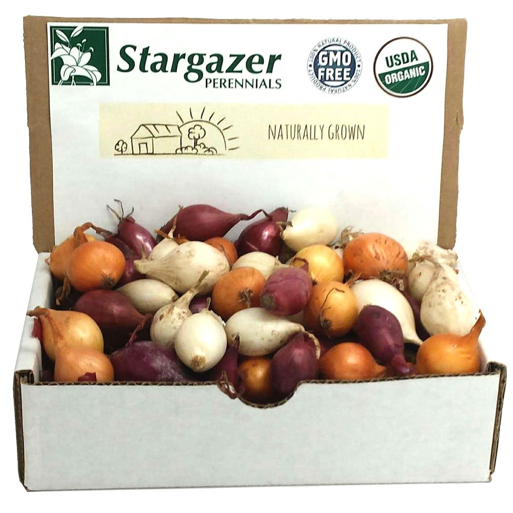 Stargazer Perennials Mixed Red, White and Yellow Onion Sets 1 Pound   Organic Non-GMO Bulbs - Easy to Grow Onion Assortment