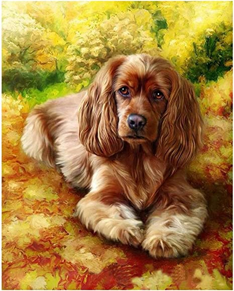 Framed Colorful Dog 16x20 inches DIY Oil Painting kit Paint by Numbers kit for Kids and Adults