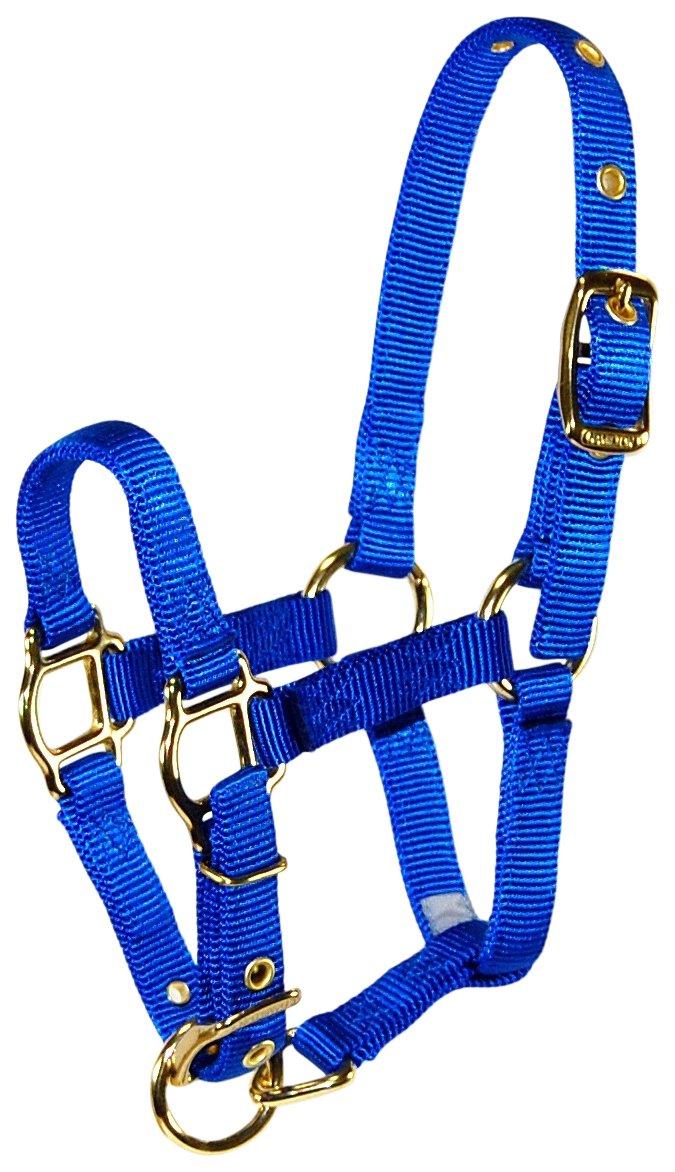 bluee Foal bluee Foal Hamilton Adjustable Miniature Nylon Horse Halter