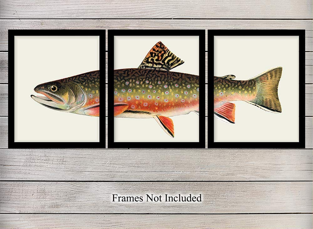 Trout Wall Art Print Set x3 - Vintage Home Decor for Beach or Lake House, Living Room, Den, Man Cave, Office, Bedroom - The Perfect Affordable Gift for Fisherman, Fishermen - 8x10 Photo - Unframed