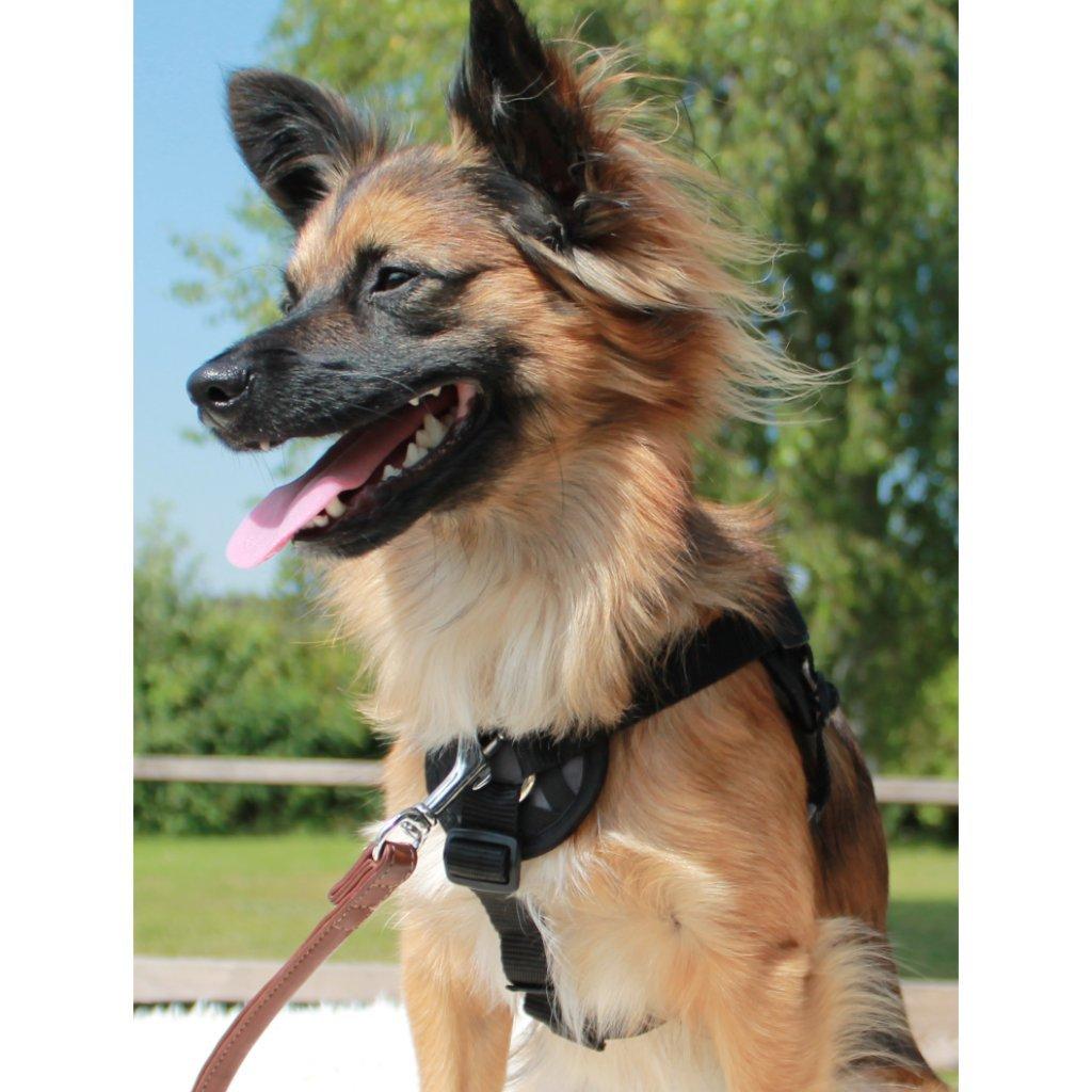 Freedog Walker - Arnés anti-tirón con forro interior suave negro ...