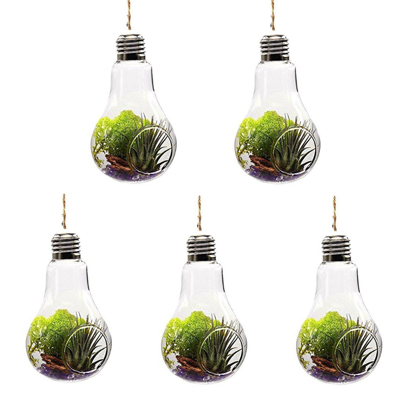 /1/tro /14*8/cm/ Vikenner 5/pcs Effacer ampoule Forme Vase en verre pour fleurs et plantes /à suspendre pour terrarium Container avec 1/Corde pour Home Garden D/écoration de bureau de mariage/