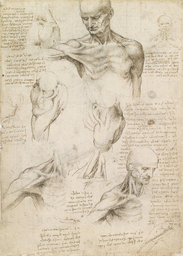 Vintage Anatomie LEONARDO da VINCI Oberflächliche Anatomie der ...