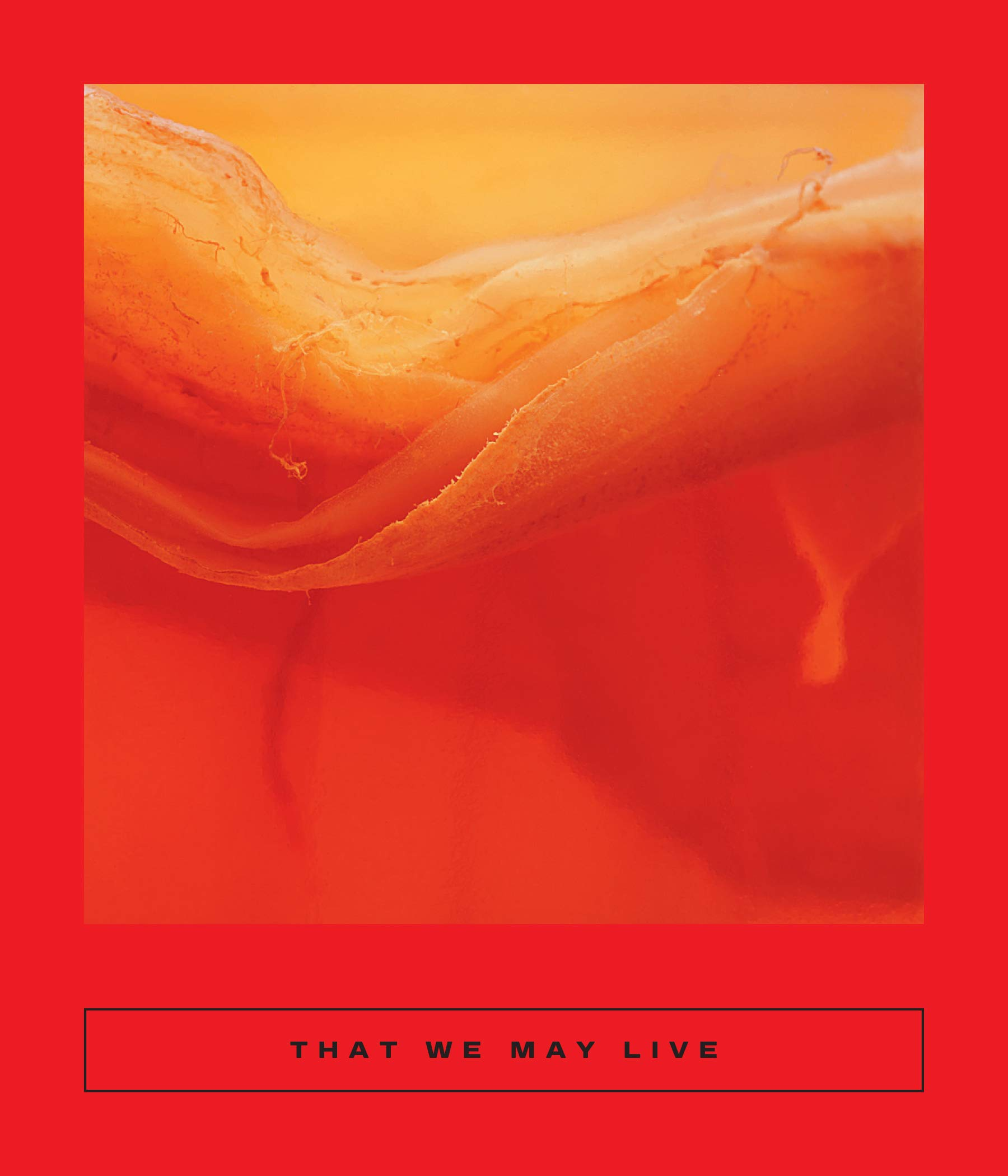 That We May Live: Speculative Chinese Fiction (Calico, 1): Yan, Ge, Tse,  Dorothy, Wa, Chan Chi, Chen, Si'an, Tam, Enoch, Zhu, Hui, Evans, CJ,  Coolidge, Sarah: 9781949641004: Amazon.com: Books