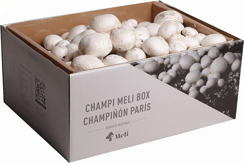 SETAS MELI | Kit Auto Cultivo Champiñon Paris | Para cultivar en casa | Crece en 14 dias | Kit perfecto para regalar | Hecho en España