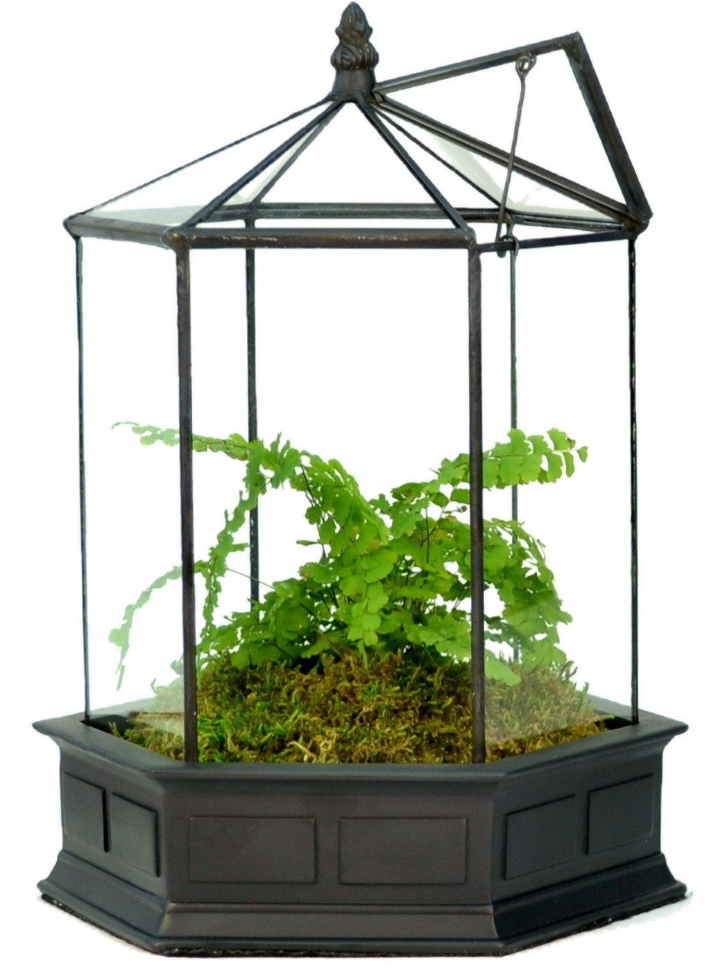 H Potter 6 Sided Glass Terrarium Wardian Case Plant Container Succulent Planter by H Potter