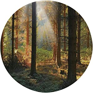 "Ylljy00 Farm House Decor 7"" Dinner Plate,Sunset View of Dark Pine Forest in Autumn Foggy Scene with Sunbeams Trunks Shadow Ceramic Decorative Plates,Dining Table Tabletop Home Decor,Orange Green"
