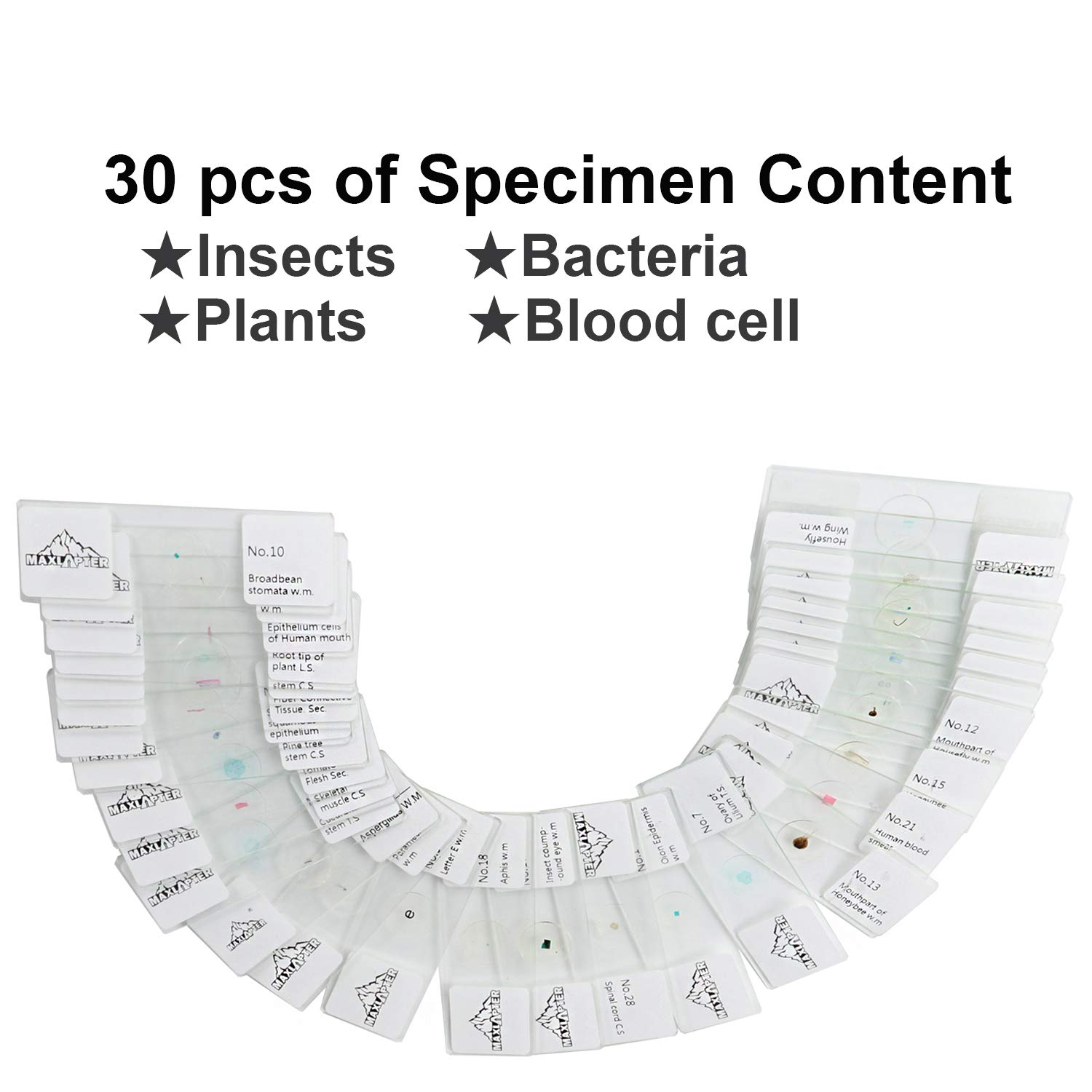 50 pcs Microscope Slides Prepared with Specimen for Students Biology and Science Early Education MAXLAPTER